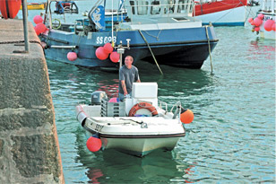 Sandeels caught in Cornwall